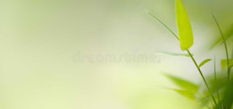 Бамбуковые листья, зеленые лист на запачканной предпосылке растительности стоковое изображение