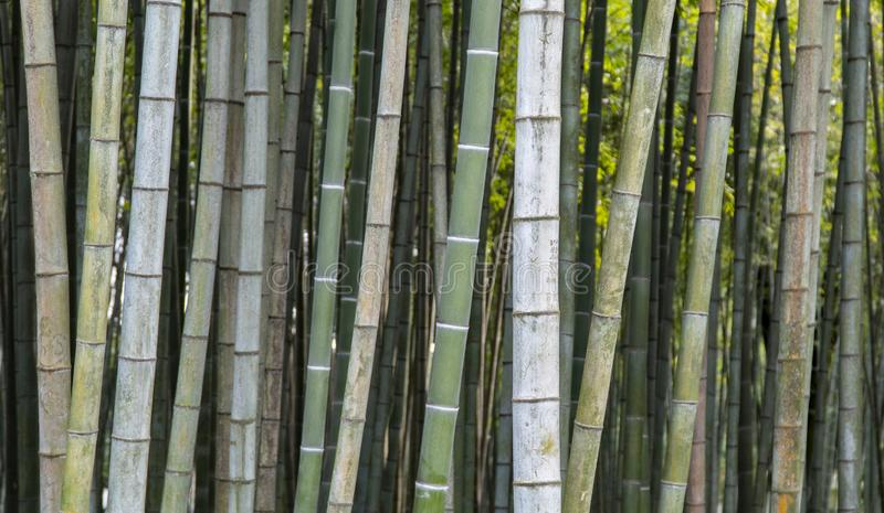 Бамбуковые обои предпосылки стоковая фотография