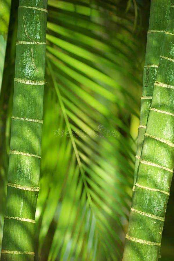 Бамбуковые штанги стоковые изображения rf