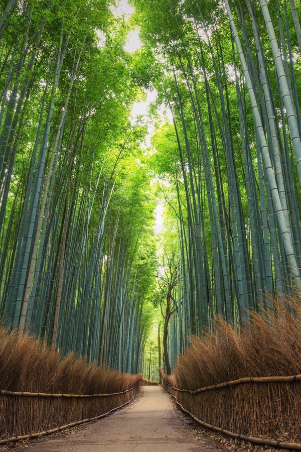 Бамбуковый лес в Киото, Arashiyama, Японии стоковые изображения rf