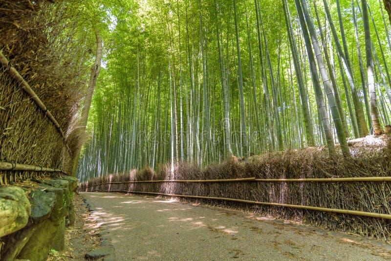 Бамбуковый лес в Arashiyama, Киото Японии стоковые фотографии rf