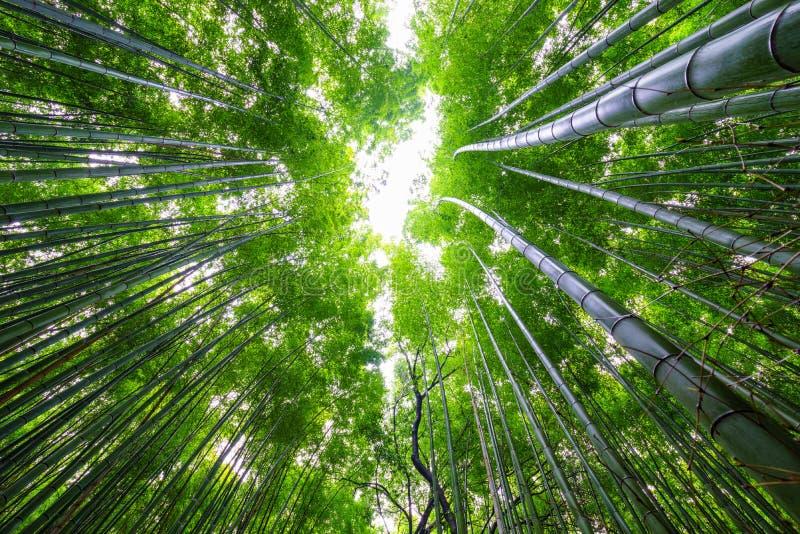 Бамбуковый лес, Arashiyama, Киото, Япония стоковая фотография rf