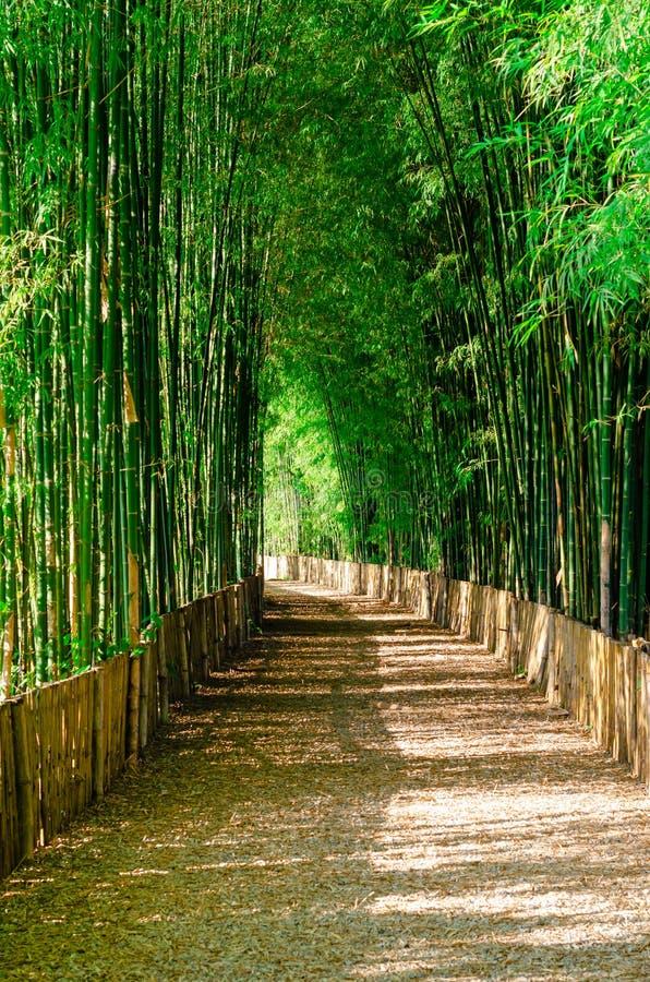 Бамбуковый лес дерева с дорожкой стоковое фото rf