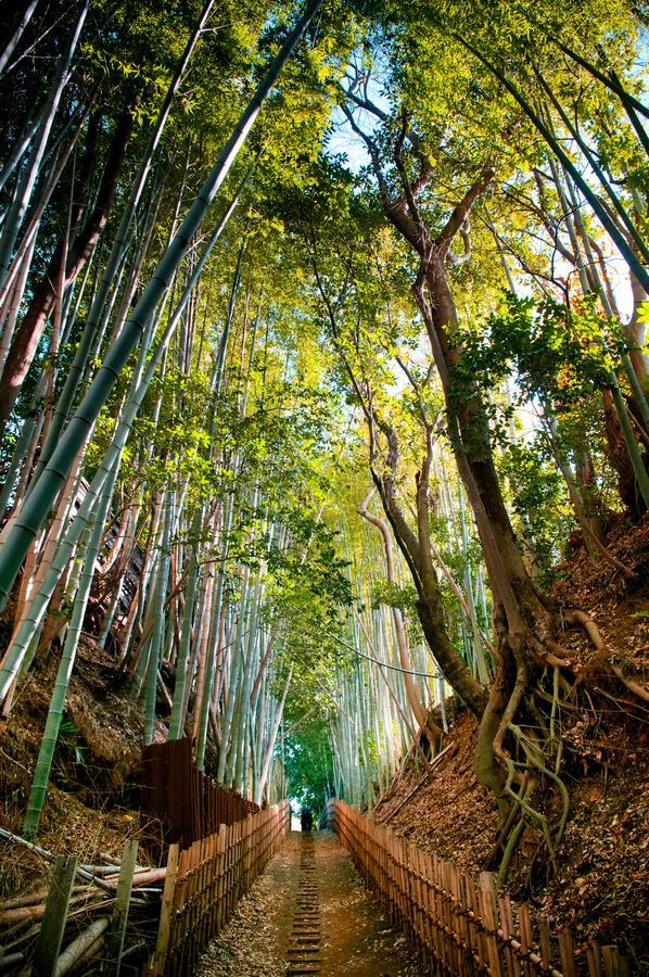 Бамбуковый лес и малый переулок грязи, город Сакуры, Chiba, Япония стоковые фотографии rf