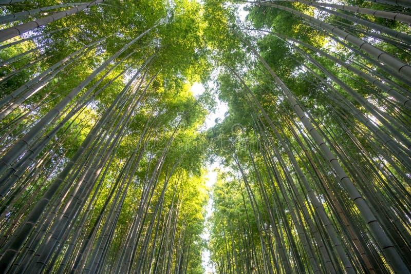 Бамбуковый лес на Arashiyama, Киото, Японии стоковые фотографии rf