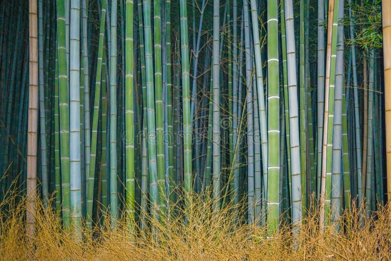 Бамбуковый лес Kioto, Япония на ноче стоковые фото