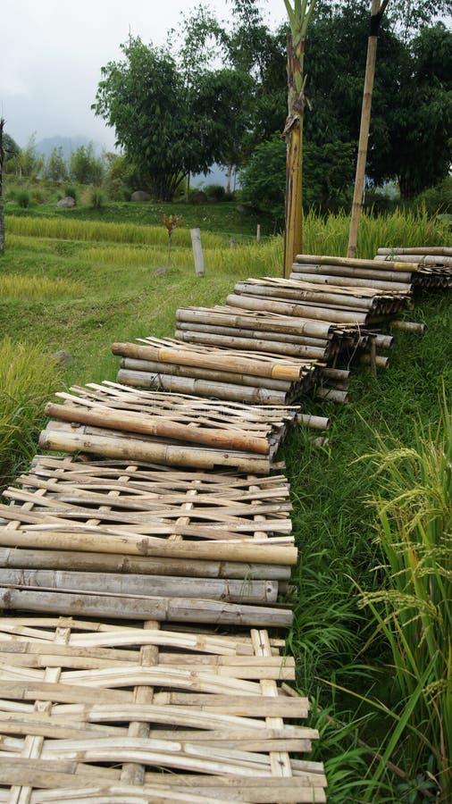 бамбуковый мост в полях стоковое фото