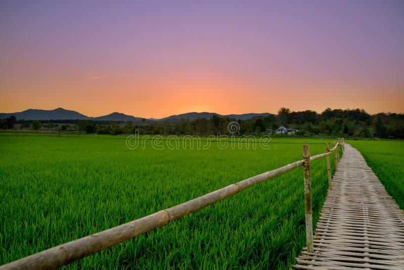 Бамбуковый мост в рисовых полях, заход солнца стоковое изображение