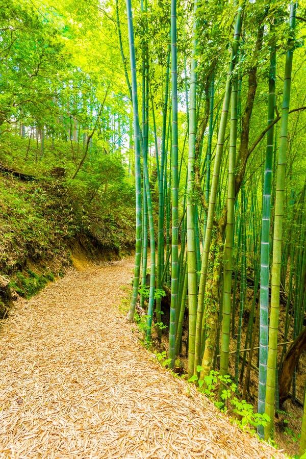 Бамбуковый путь леса к замку Tsumago земель стоковое фото rf