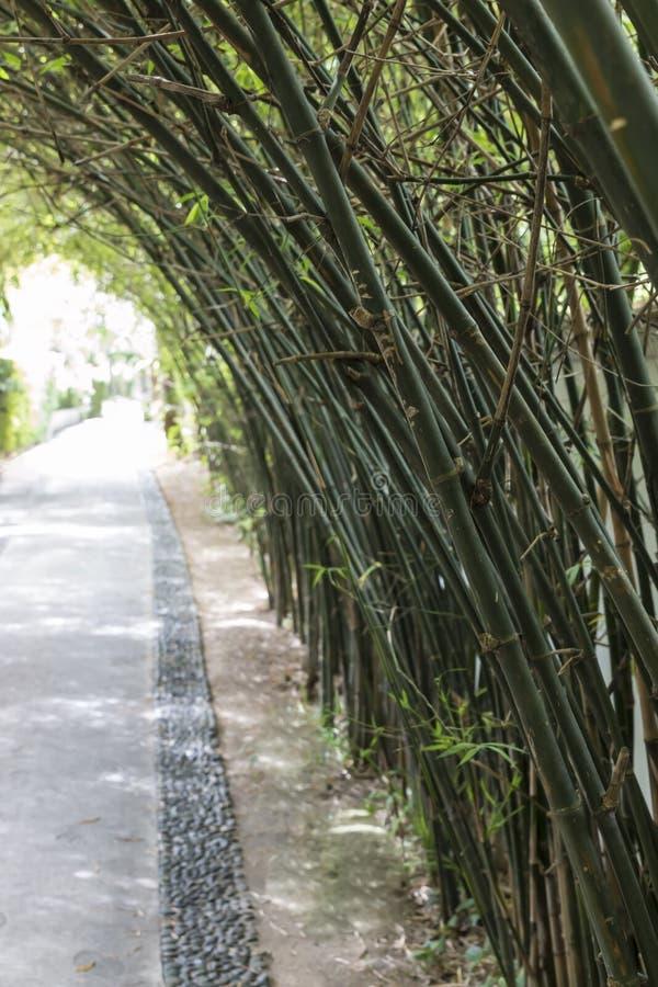 Бамбуковый тоннель стоковая фотография