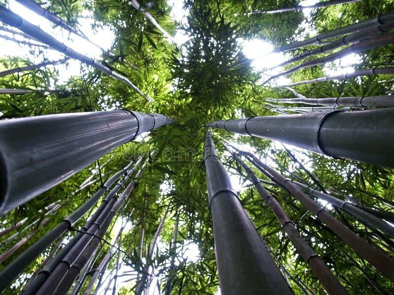бамбук вверх стоковое изображение