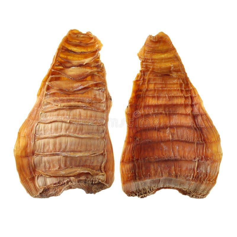 бамбук всходы longji изображения guilin фарфора китайские варя высушенные кухнями специальные используемые террасы будут Эти бамб стоковая фотография