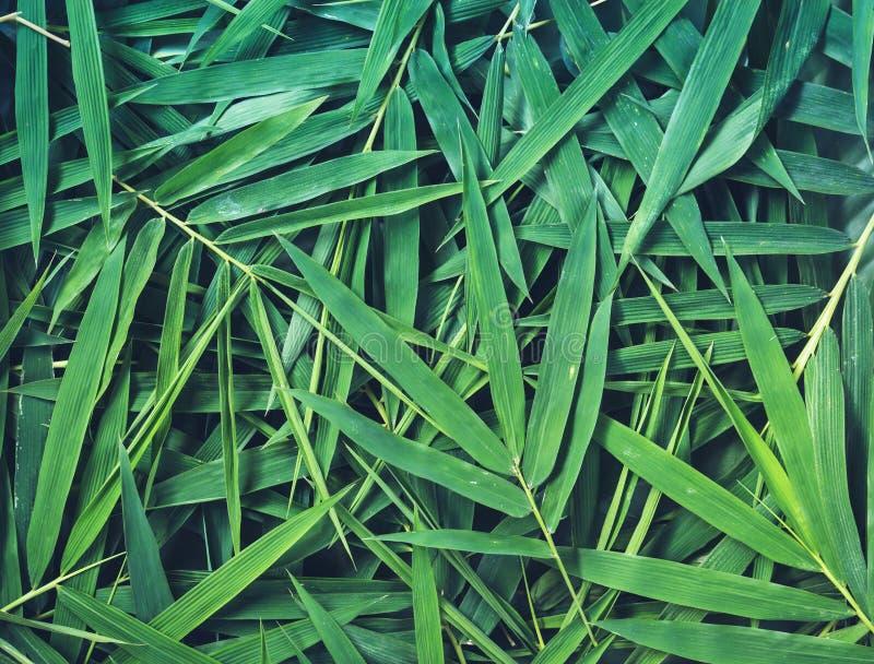 Бамбук выходит предпосылка стоковые изображения