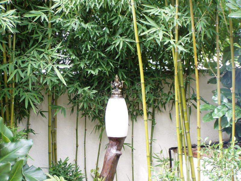 Бамбук в моем доме стоковое изображение