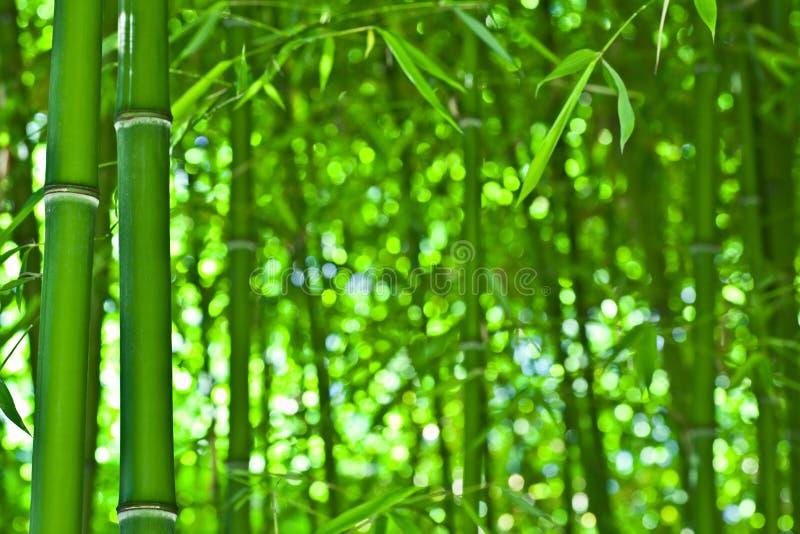 бамбук любит Дзэн стоковые изображения rf