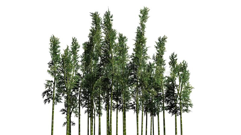 Бамбук - различные зеленые herbaceous растущие заводы стоковые фотографии rf