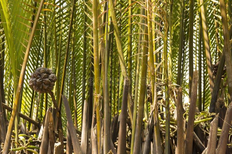 Бамбук речного берега стоковые фото