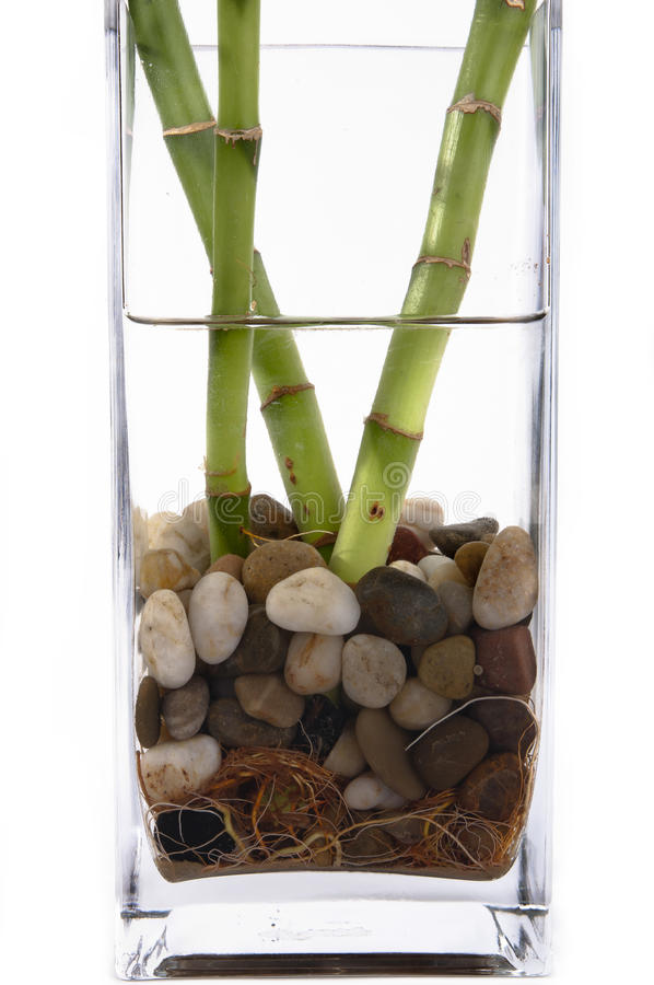 бамбук удачливейший стоковые изображения