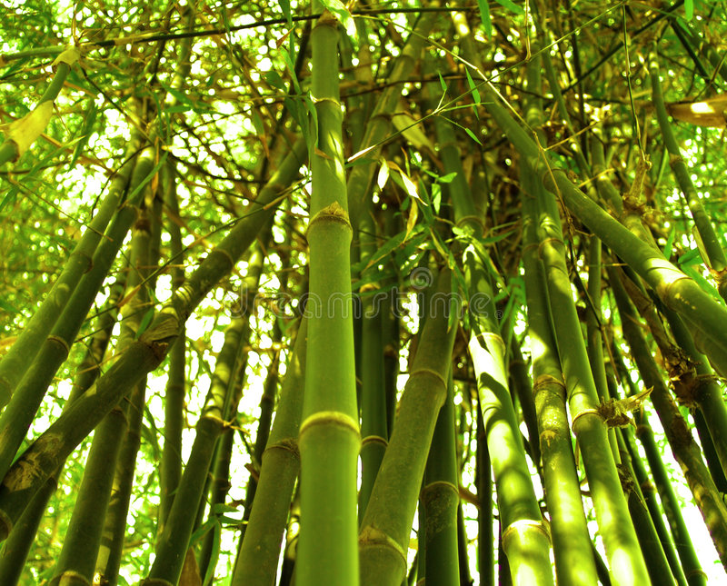 бамбук 06 стоковые фотографии rf