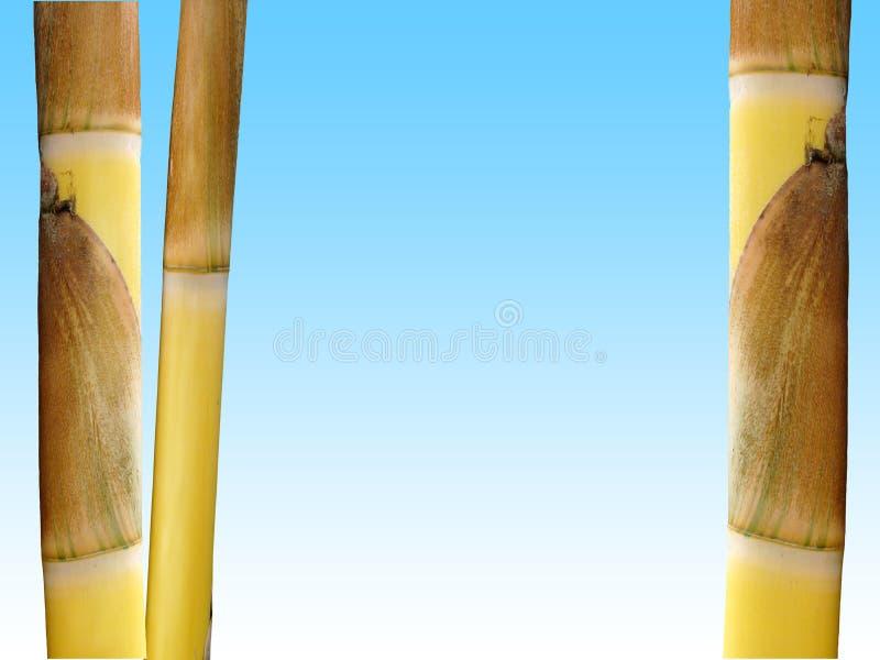 Download бамбук стоковое фото. изображение насчитывающей прямо, brougham - 493848