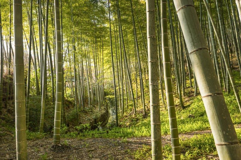 Бамбук forrest стоковые фото