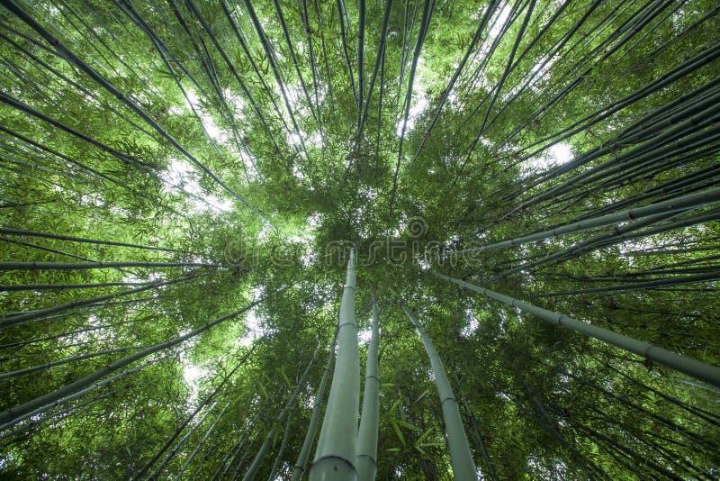 Бамбук forrest стоковая фотография rf