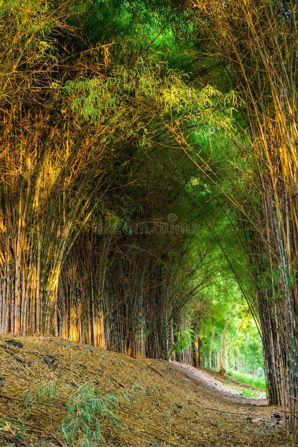 Бамбук forrest стоковая фотография