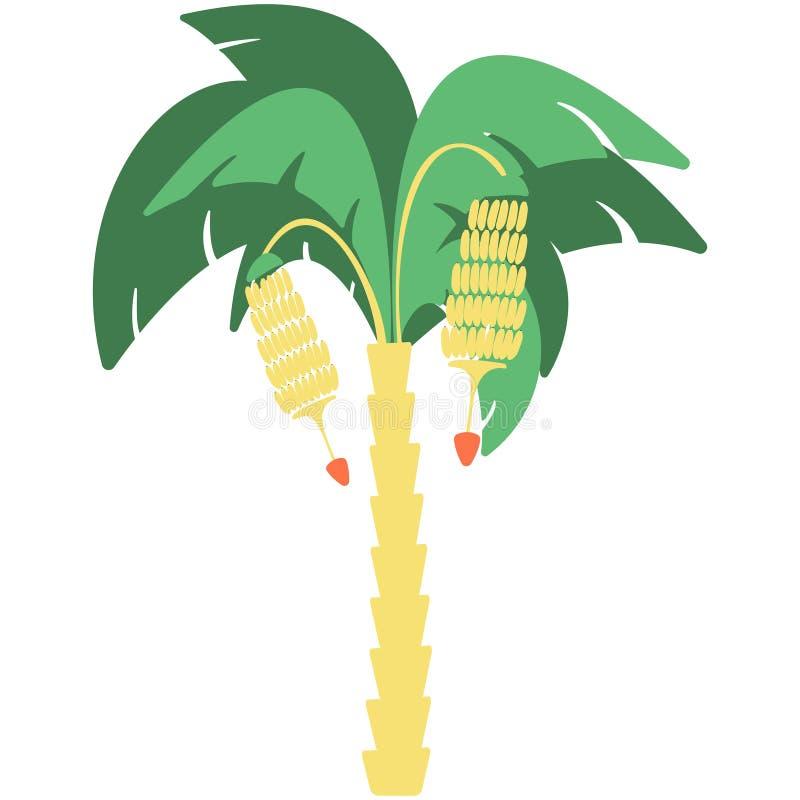 Банановое дерево с 2 пуками банана на белой предпосылке иллюстрация штока