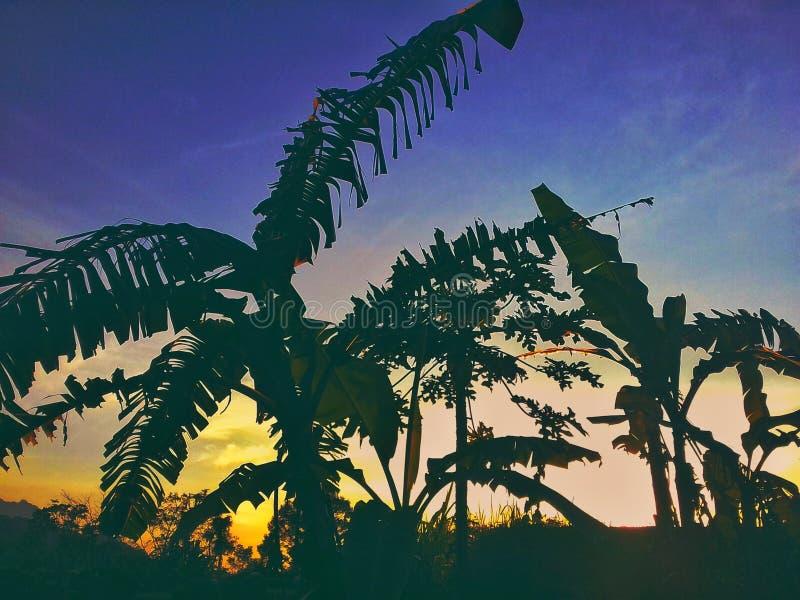 Банановые дерева захода солнца и стоковые фото