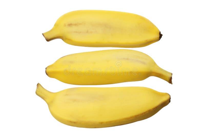 Download Бананы сахара стоковое фото. изображение насчитывающей плодоовощ - 33725944