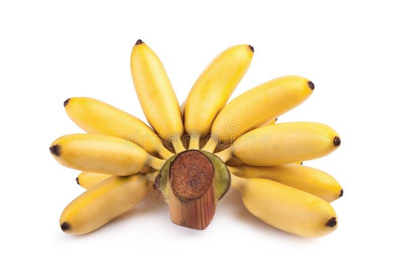 Банан желтого цвета Mas Pisang на белизне стоковое изображение