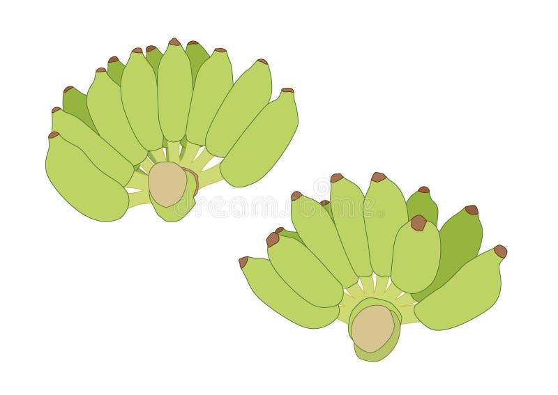 Банан цвета зеленый и сырцовые бананы на белой предпосылке иллюстрация вектора