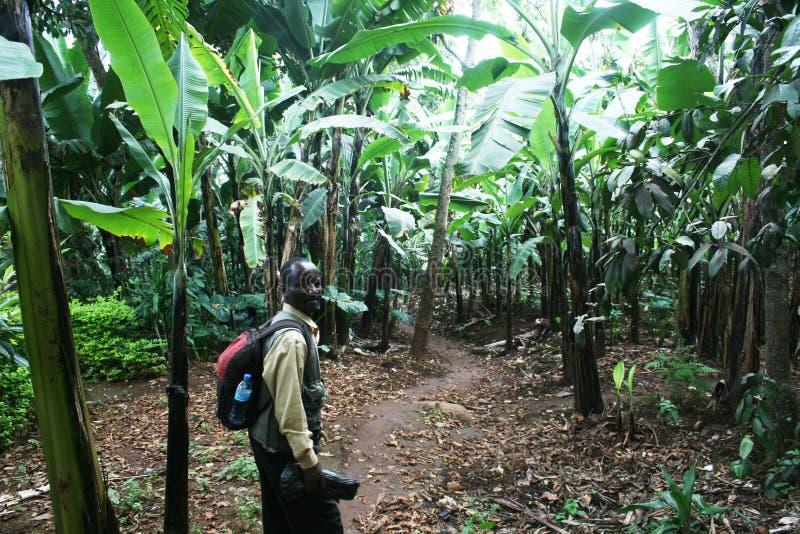 Банан trekking стоковые фотографии rf