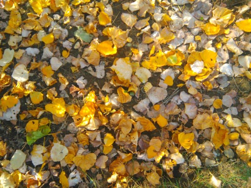 банк осени красит немецкий желтый цвет вала реки rhine стоковые изображения rf