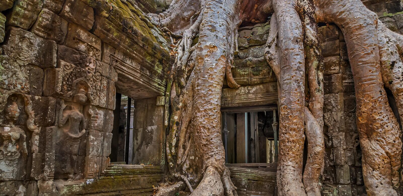 Баньян в Камбодже стоковое изображение