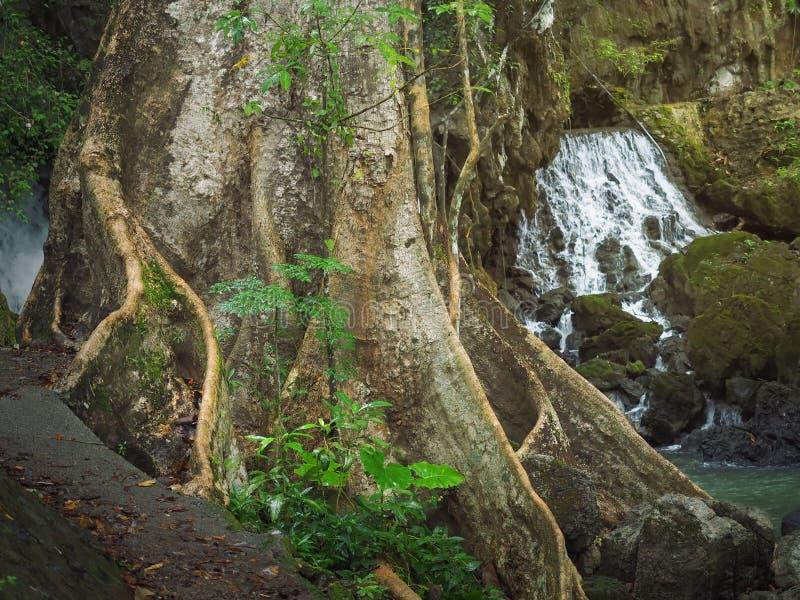 Баньян и водопад, Таиланд, Krabi стоковое изображение