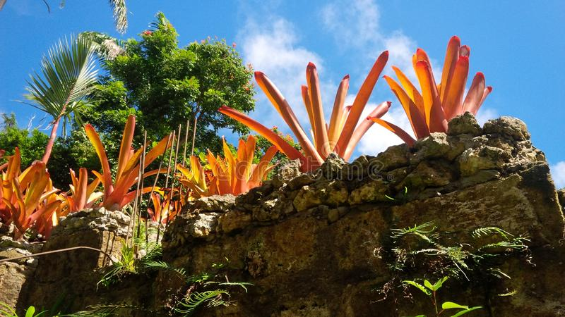 Барбадос, карибская сцена природы стоковая фотография rf
