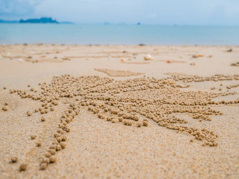 Барботер песка Crabs научный Subfamily: Ceratophthalmus Ocypode стоковые фотографии rf