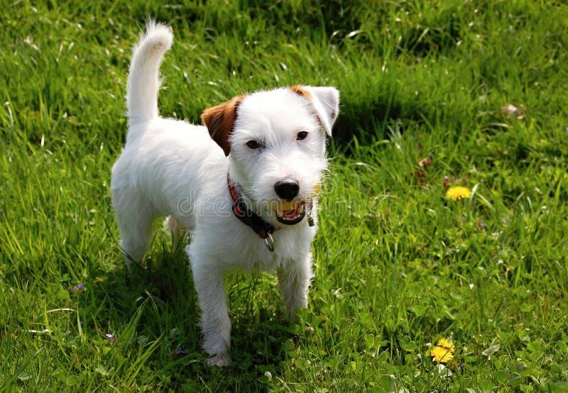 Барни собака стоковое изображение