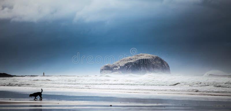 Басовый утес от пляжа стоковые изображения rf