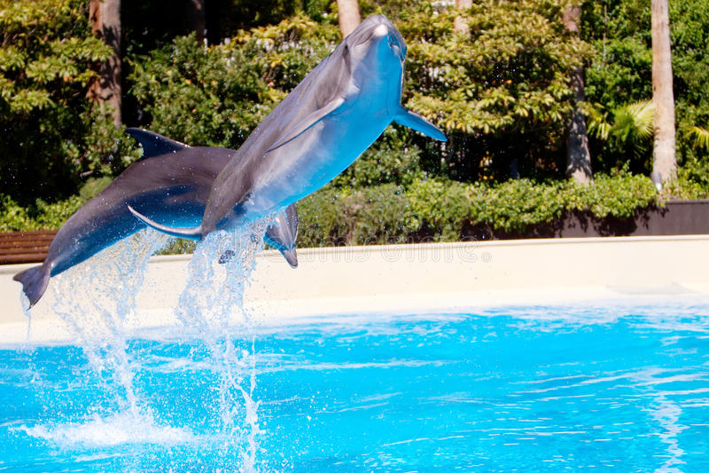 бассеин красивейшего дельфина скача стоковые фото