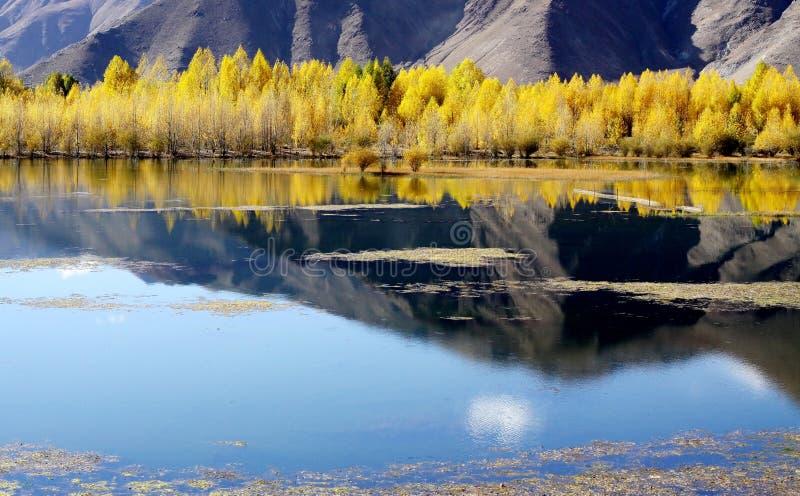 Бассейн в плато стоковая фотография rf