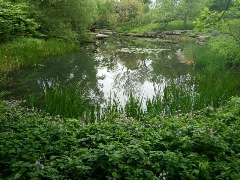 Бассейн лилии стоковое фото