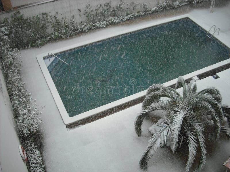 Бассейн и пальма снега стоковое изображение