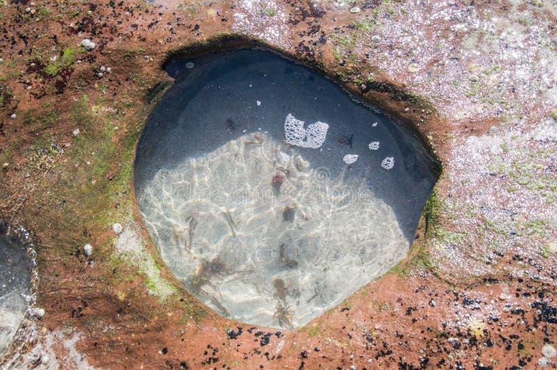 Бассейн утеса в рифе пляжа стоковая фотография
