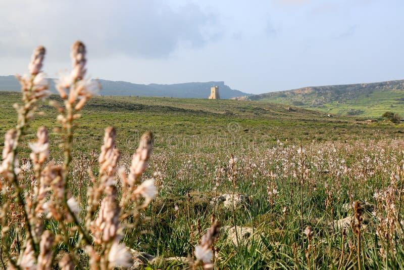 Башня вахты в расстоянии стоковые фотографии rf