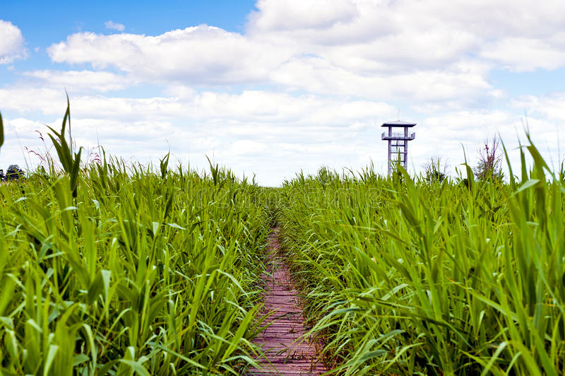 Башня зоны и бдительности болота стоковые фотографии rf