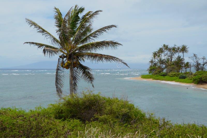 Бдительность на пляже murphy стоковые фото