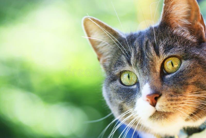 бдительный кот стоковое фото