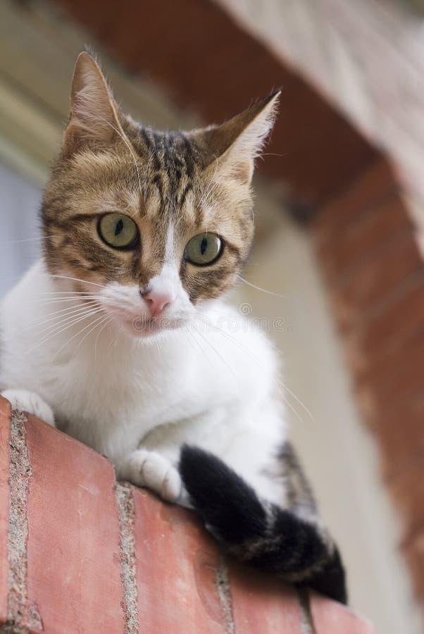бдительный кот стоковые фото